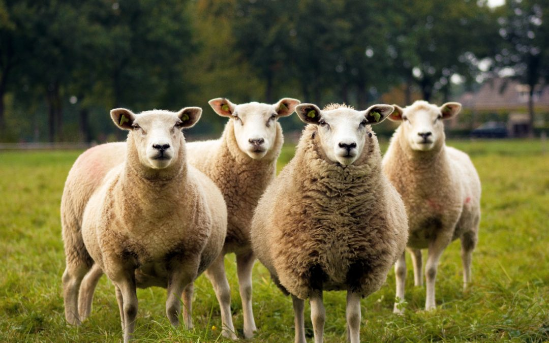 #40: Dear Gay Anglicans: Faithful Shepherds and Stubborn Sheep